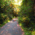 Na co musisz uważać biegając po lesie?