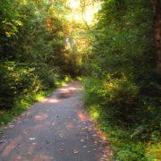las, biegi